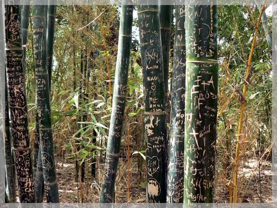 Bambou - Blog Vos photos - 1er juin 2008