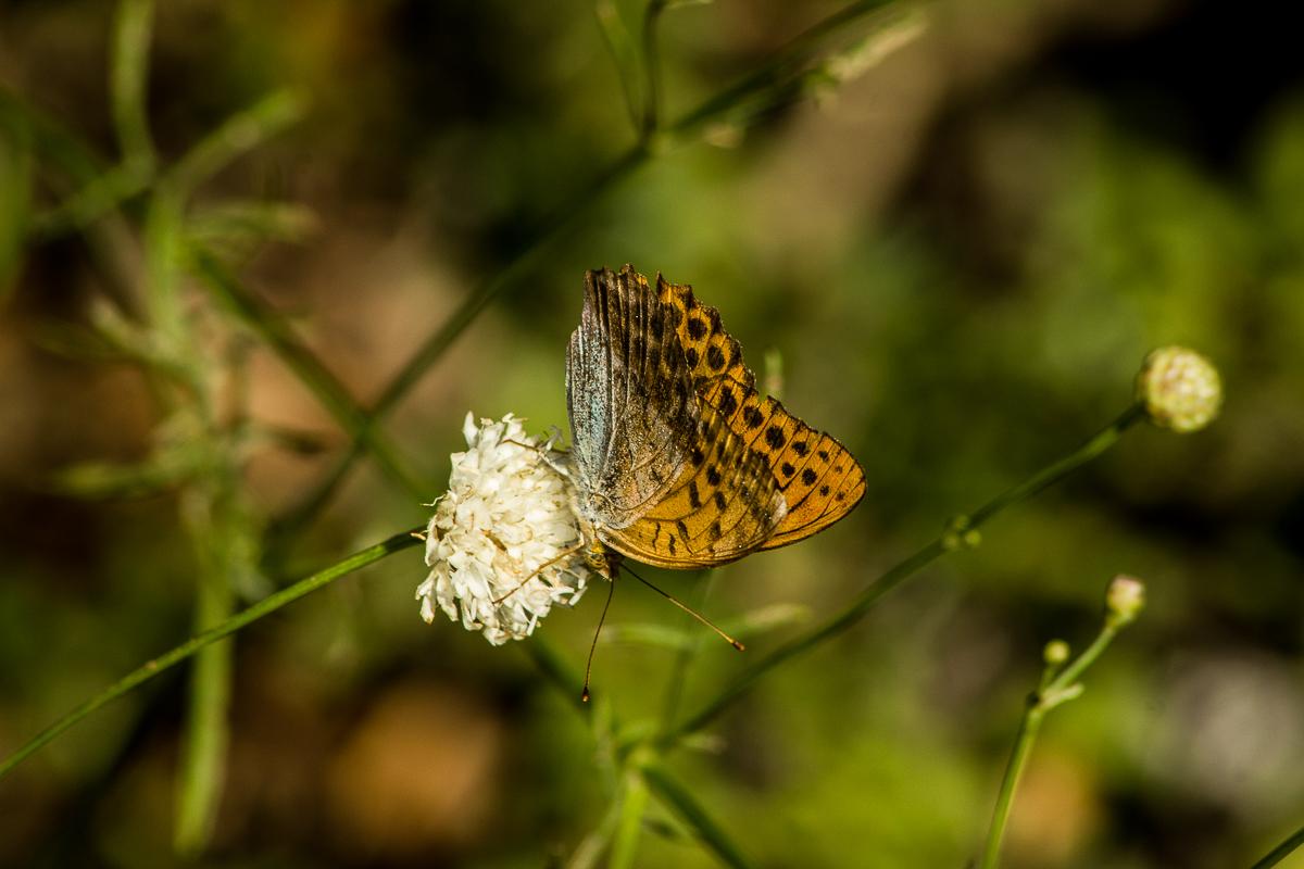 Dans la nature