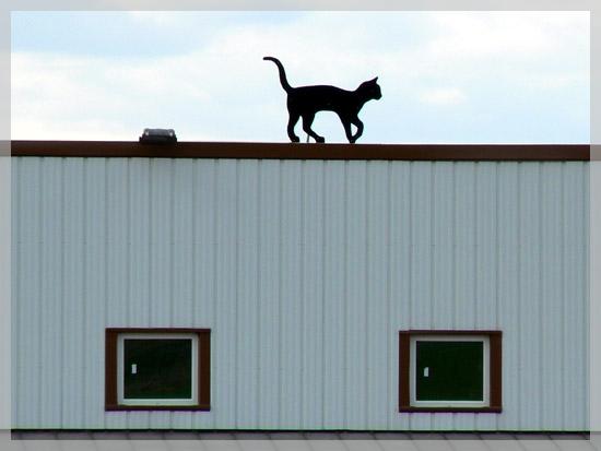 Comme un chat sur un toit - 23 mars 2008
